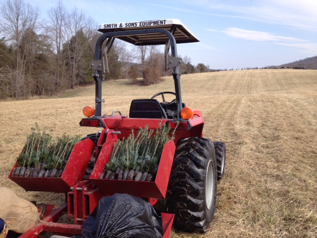 Christmas Tree Farm Virginia photo 2-2