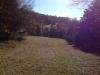 Christmas Tree Farm Virginia photo 4-1