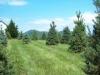 More Trees - Christmas Tree Farm Virginia