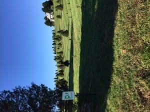Christmas Tree Farm Virginia